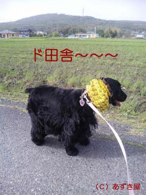 azuki481.jpg