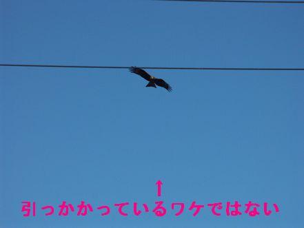 08dece14034.jpg