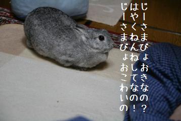 20081128_1.jpg