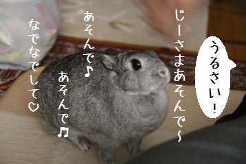 20081217_1.jpg