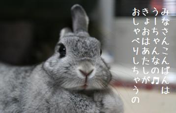 20090211_1.jpg