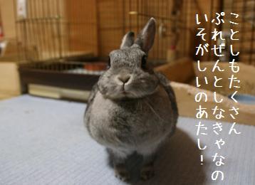 20090214_2.jpg