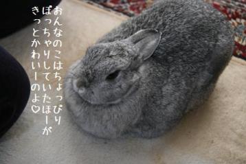 20090222_4.jpg
