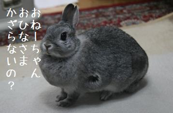 20090304_2.jpg