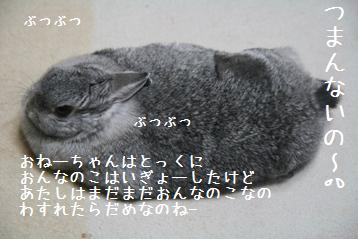 20090304_7.jpg