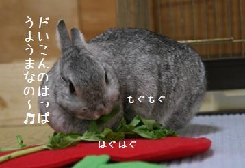 20090327_2.jpg