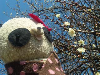 咲きはじめた梅の花