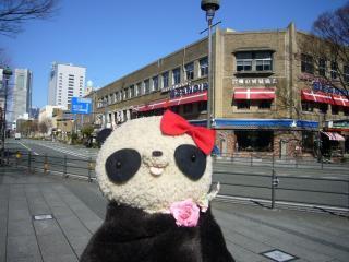 ばぶちゃんIN日本大通り