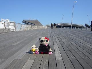 4タモリ大桟橋に移動