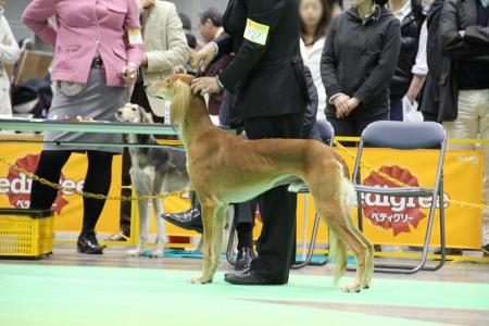 kanagawaFCI20110220_IMG_0058.jpg