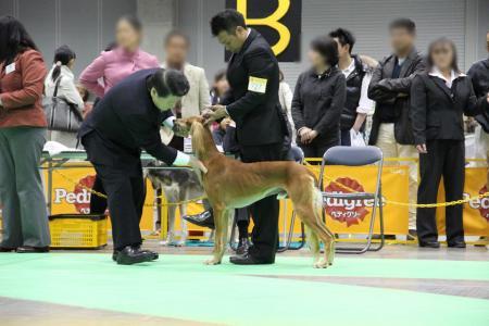 kanagawaFCI20110220_IMG_0061.jpg