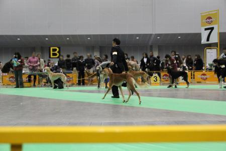 kanagawaFCI20110220_IMG_0081.jpg