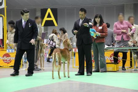 kanagawaFCI20110220_IMG_0085.jpg