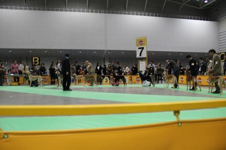 kanagawaFCI20110220_IMG_0108.jpg