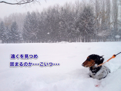 IMG_2253-2.jpg