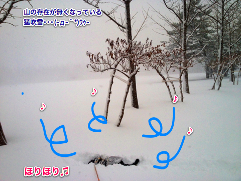 IMG_2276-2.jpg
