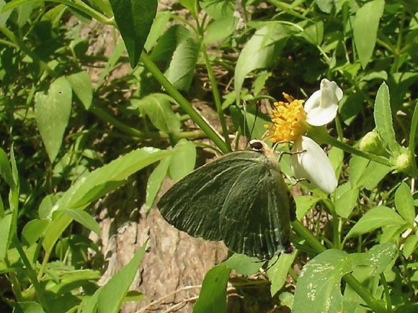SjIwakawaFCMP2051020.jpg