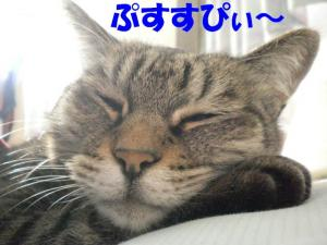 枕ぷすルーク