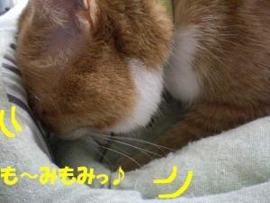 も~みココ