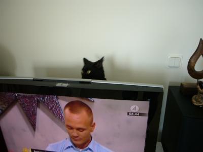 テレビのウラからこんにちは