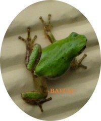 a-frog1.jpg