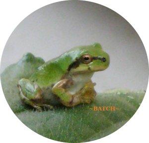a-frog2.jpg