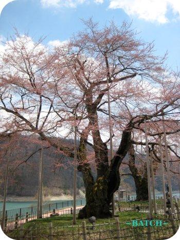 shokawa5.jpg