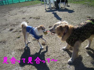 ひっぱりぃ2