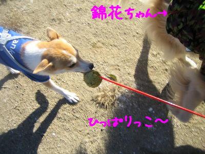ひっぱりぃ1