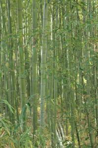 竹林1_800