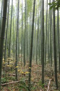 竹林2_800