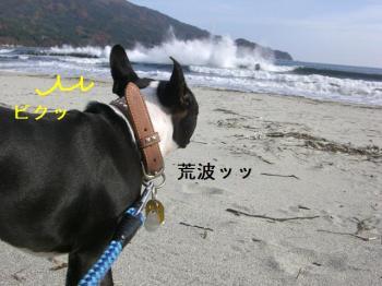 コピー ~ CIMG3387