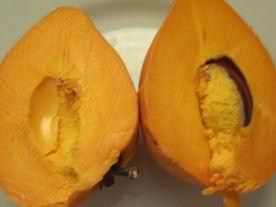 eggfruit.jpg