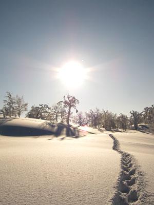 音江の雪原