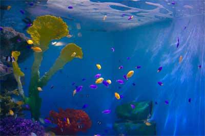 小樽水族館 熱帯