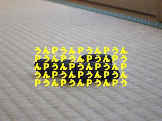 20060109221301.jpg