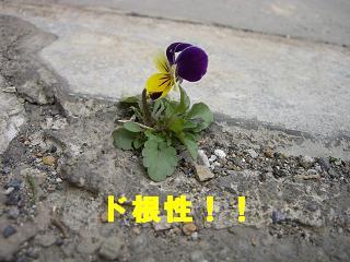 20060330131018.jpg