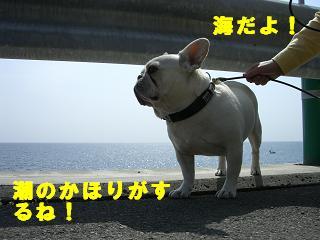 gashuku-6.jpg