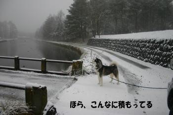 081214_3.jpg