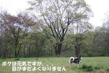 20090414_1.jpg