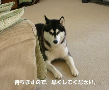 20090612_2.jpg