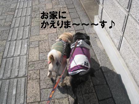 新年散歩5M