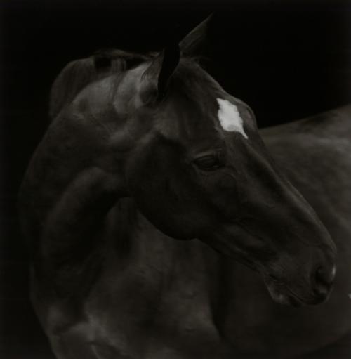 Horses_69_convert_20110504124720.jpg