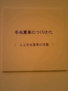 090321_1202~0001