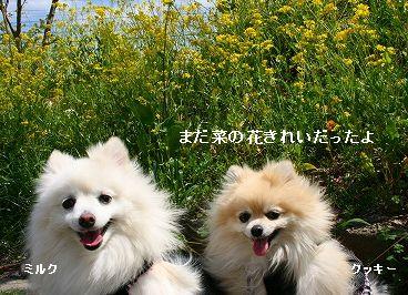 s-IMG_3753_20120330143352.jpg