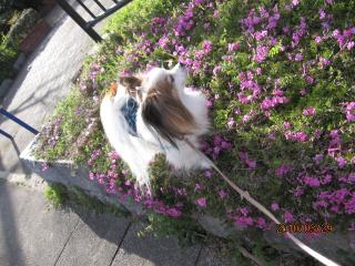 春の匂い.jpeg
