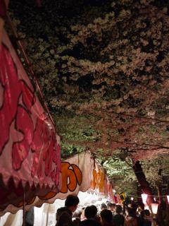 屋台と桜.jpeg