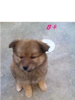 子犬♀.jpg
