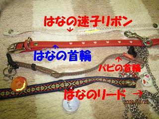 首輪・リード.JPG