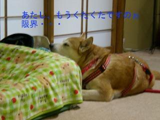 gon4-CIMG0480.jpg